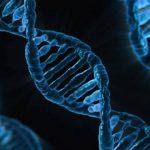 食べ物を変えれば、遺伝子が変わり、長生きができる